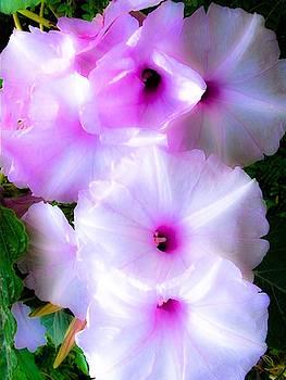 Petunia Magic by Gayle Price Thomas