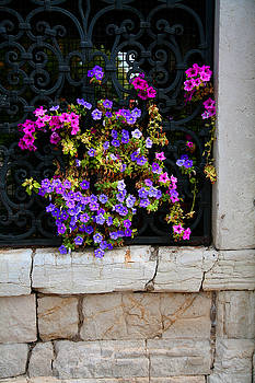 Donna Corless - Petunias Through Wrought Iron Window