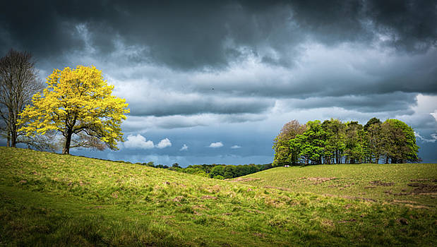 Petworth Dark and Light by Michael Hope