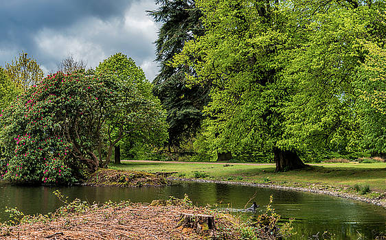 Petworth Lake with Dog by Michael Hope