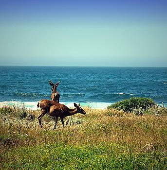 Joyce Dickens - PG Ocean Side Deer Two