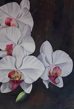 Phalaenopsis Beauty by Heather Gallup