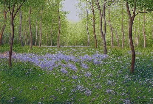 Phalempin forest in spring, bluebells by Raphael Seygnovert