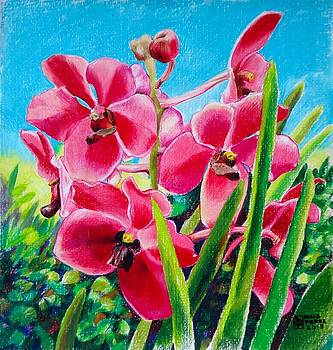 Philippine Orchid by Bong Perez