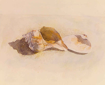 Phinney's Point Shells by Tyler Ryder