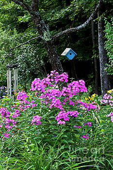 Phlox And Birdhouse by Alan L Graham
