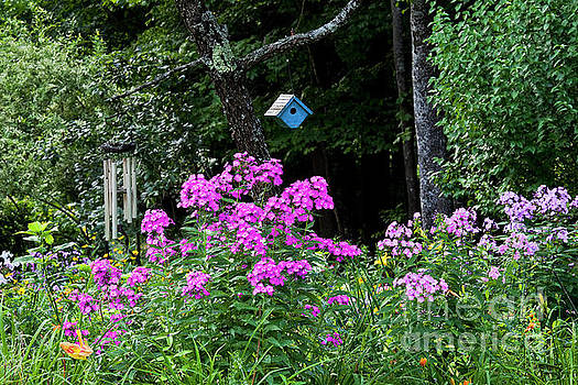 Phlox Garden Scenic by Alan L Graham