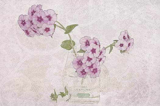 Sandra Foster - Phlox, Perfume And Lace