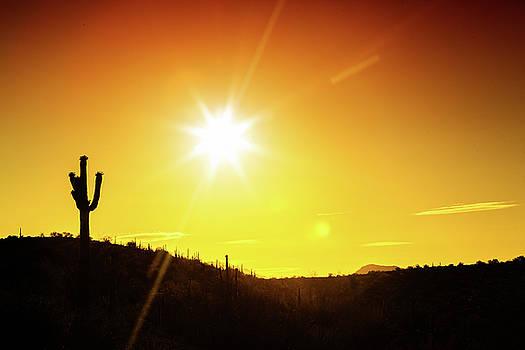 Phoenix Arizona Desert Sunset Silhouette by Susan Schmitz