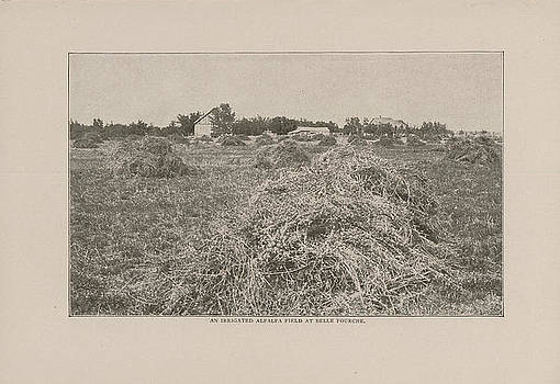 Chicago and North Western Historical Society - 1908 Photo of Alfalfa Field at Belle Fourche