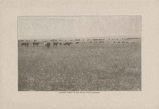 Chicago and North Western Historical Society - Photo of Cattle Ranch From 1908 Tour Guide