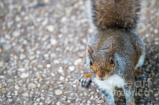 Photo of Squirel Looking up from the ground by PorqueNo Studios