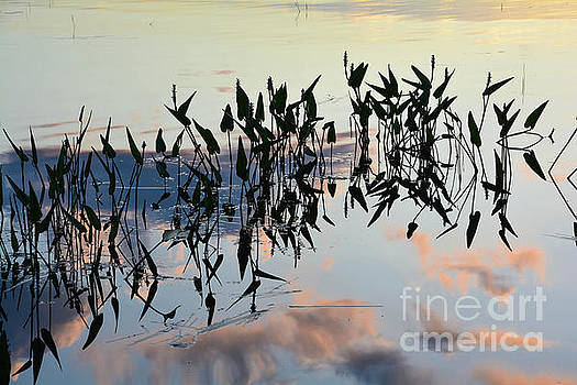 Pickelweed Reflection Abstract by Lisa Kilby