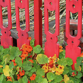 Art Block Collections - Picket Fence and Nasturtiums
