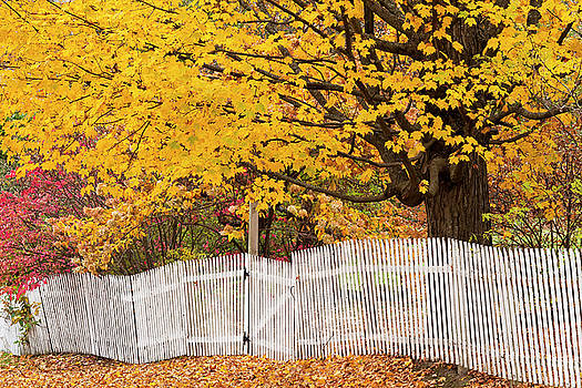 Picket Fence Autumn by Alan L Graham