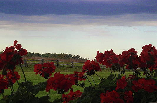 Picket fence, flowers and storms by Cathy Lindsey