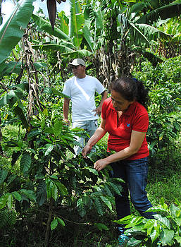 Rosa Diaz - Picking Coffee Beans