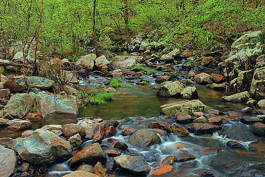 Pickle Creek In Springtime 2 by Greg Matchick