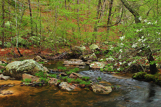 Pickle Creek In Springtime 5 by Greg Matchick