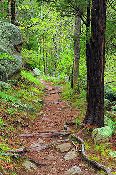 Pickle Creek Trail 1 by Greg Matchick