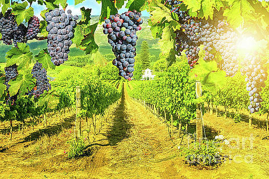 Picturesque vineyard at sunset by Benny Marty