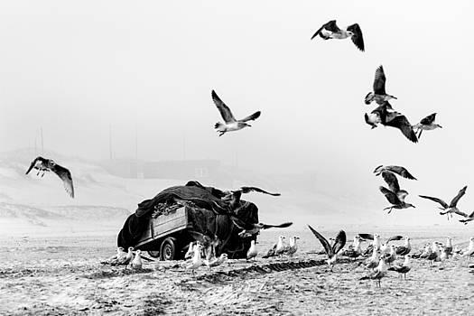 Pieces from the Sea by Ricardo Machado