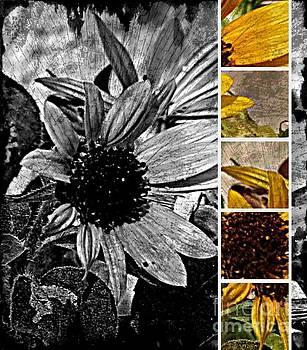 Pieces of Sunflower by Karirose Carter