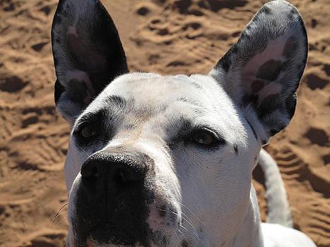 Pierce All Ears by Justyne Moore