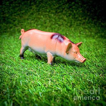 Pig figurine by Bernard Jaubert