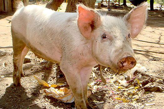 Noemi - Pig