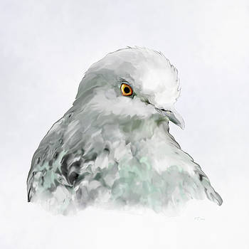 Bamalam  Photography - Pigeon