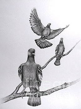 Pigeon Pals by Elizabeth H Tudor