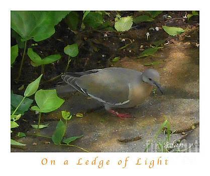 Felipe Adan Lerma - Pigeon Poster