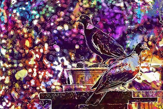 Pigeons Birds Evening Sun  by PixBreak Art