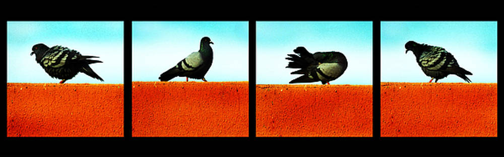Pigeons in Action by Farah Faizal