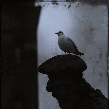Pigeons of Prague by Sharon Kalstek-Coty