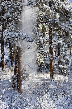 Steve Krull - Pike National Forest Snowstorm