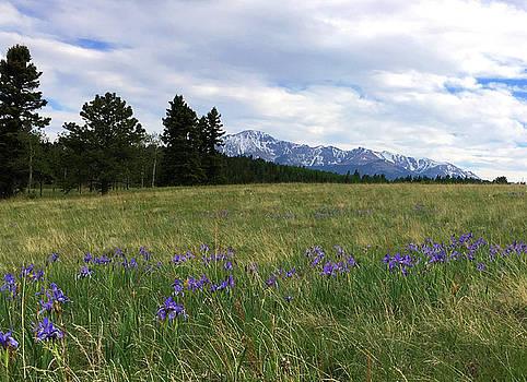 Pikes Peak and Iris by Carol Milisen