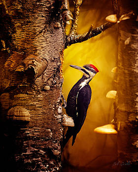 Pileated Woodpecker Forest Sunrise by Bob Orsillo