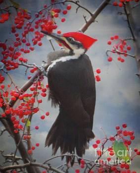 Pileated Woodpecker by Putterhug Studio