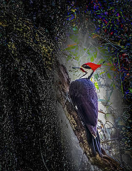 Pileated Woodpecker by Richard Goldman