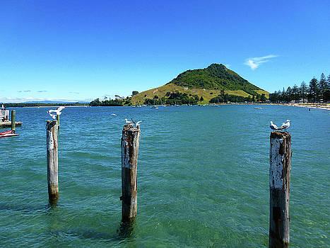 Pilot Bay Beach 3 - Mt Maunganui Tauranga New Zealand by Selena Boron
