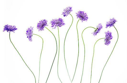 Pincushion #4 by Rebecca Cozart