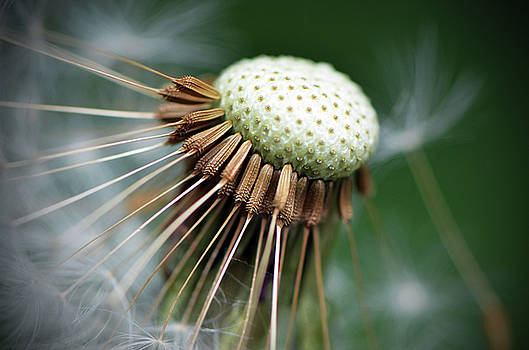 Pincushion by Shelly Wickens