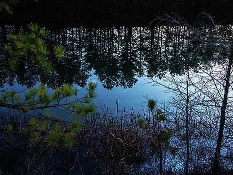 Louis Dallara - Pine Barren Reflections