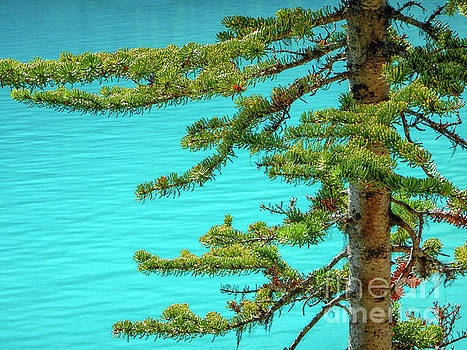 Patricia Hofmeester - Pine branches and blue water