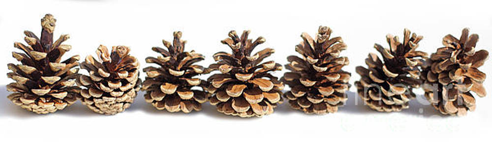 Pine Cones All In A Row by Susan Wall
