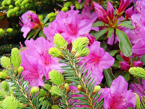 Baslee Troutman - Pine Conifer art print Pink Azaleas Flower Garden Baslee Troutman