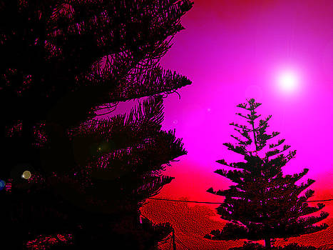 Pine Delight by Ingrid Dance