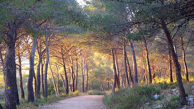Pine Forest at Sunset by August Timmermans
